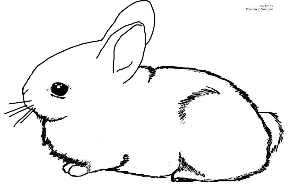 Rabbit Coloring Pages