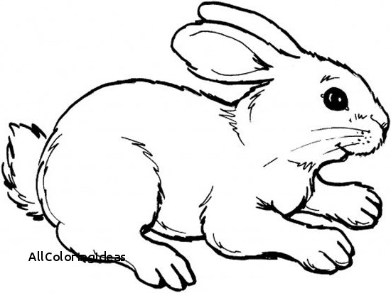 550x413 Free Bunny Rabbit Coloring Pages