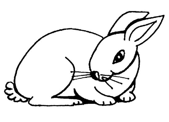 548x396 Rabbit Clipart Coloring Page