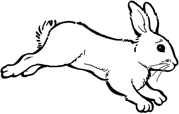 Attractive Cute Coloring Pages Of Baby Bunnies Pictures