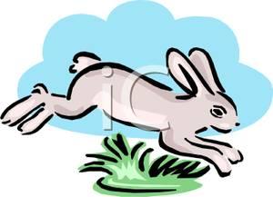 300x217 White Rabbit