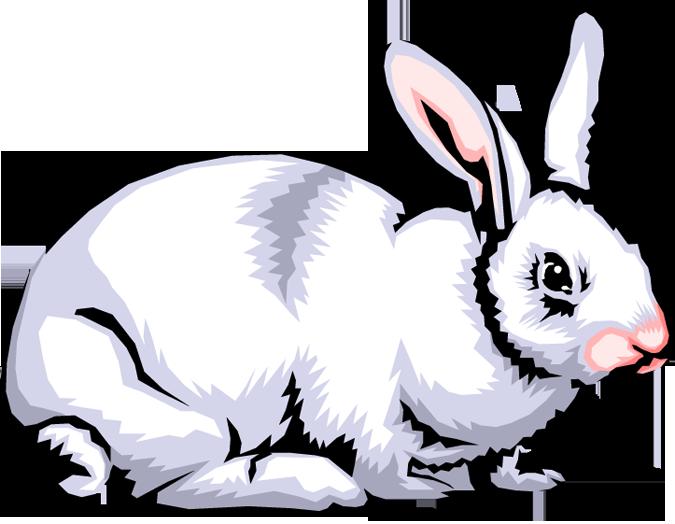 675x524 Rabbit Clip Art Pictures Clipart Panda