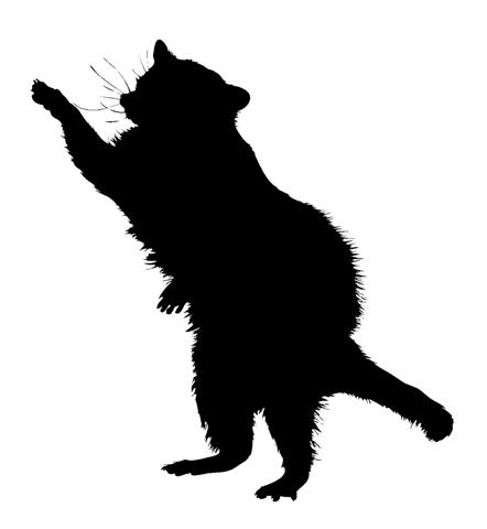 442x480 Image Result For Raccoon Face Silhouette