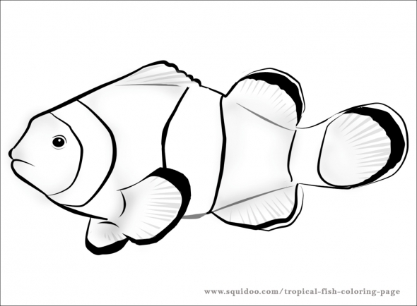 590x434 Fish Black And White Fish Black And White Rainbow Fish Clipart