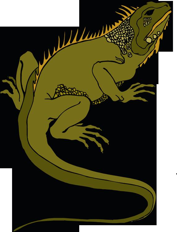 572x750 Iguana Clipart Rainforest Animal