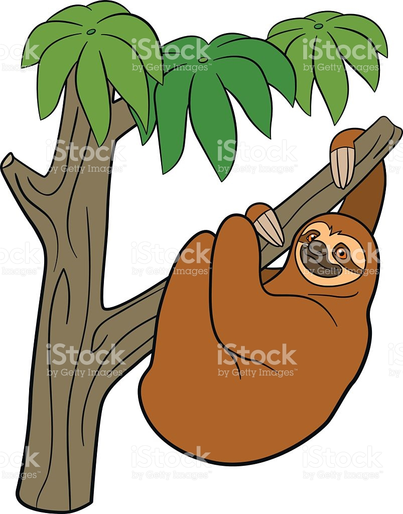 803x1024 Sloth Clipart Rainforest Animal