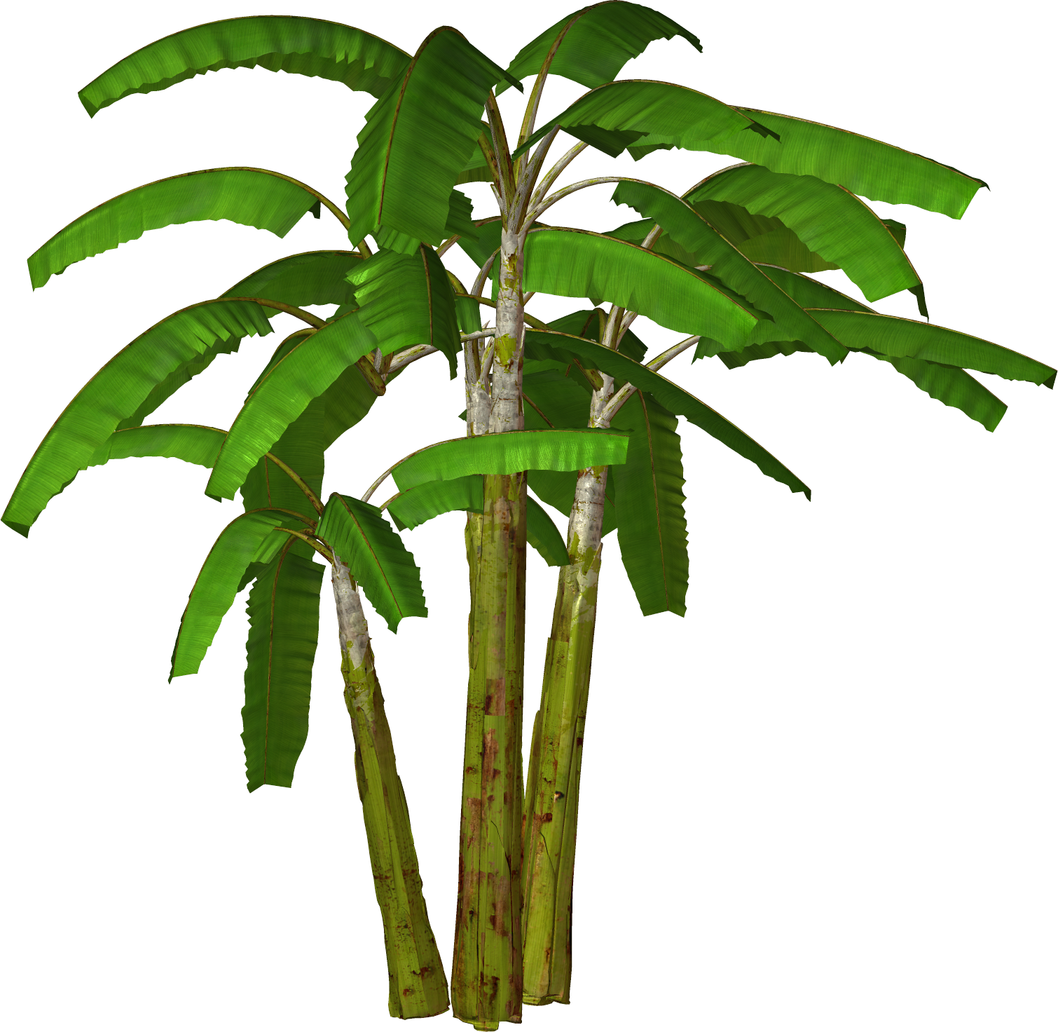 1510x1472 Jungle Trees High Resolution Clipart