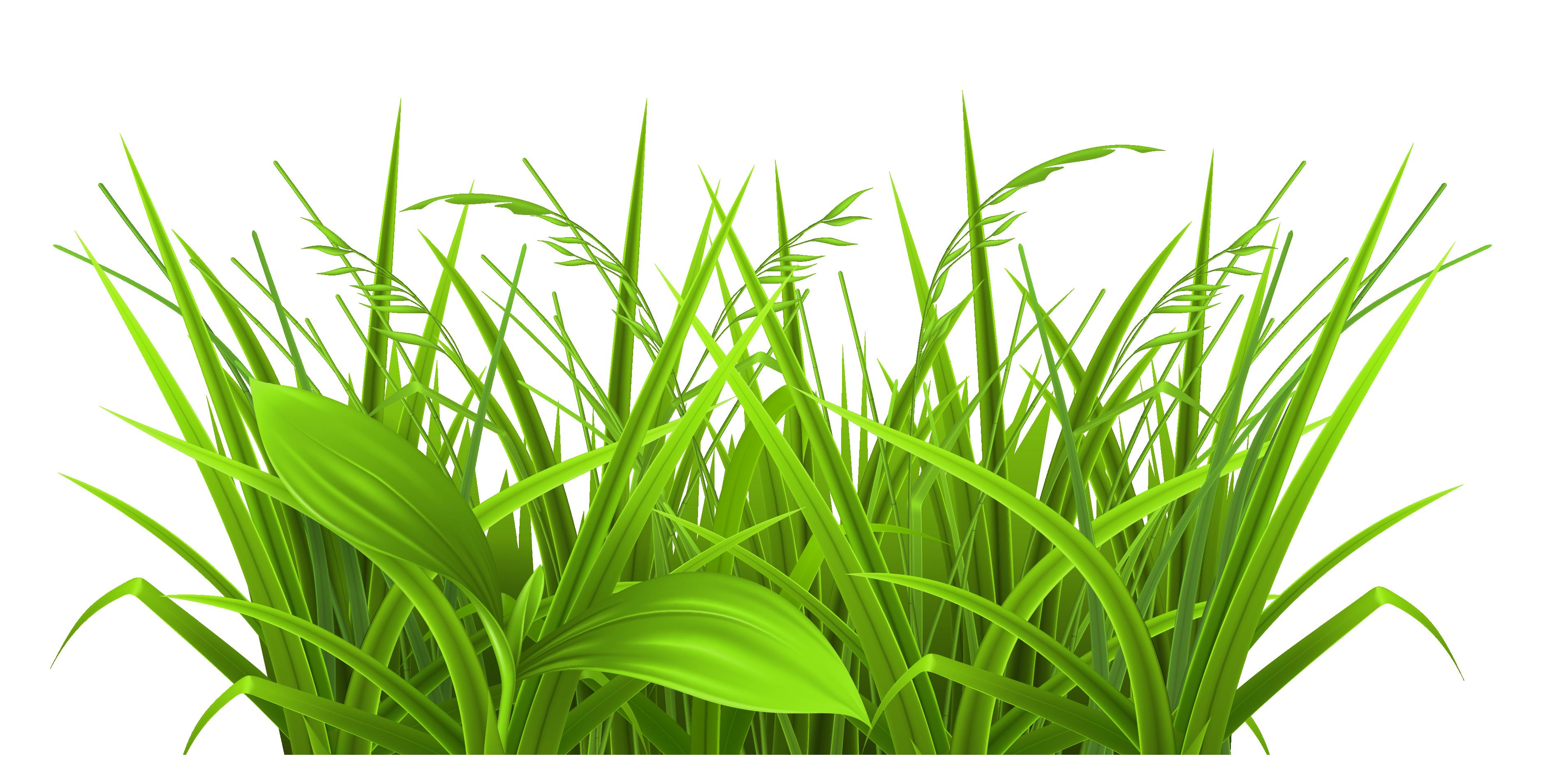3758x1907 Rainforest Clipart Grass
