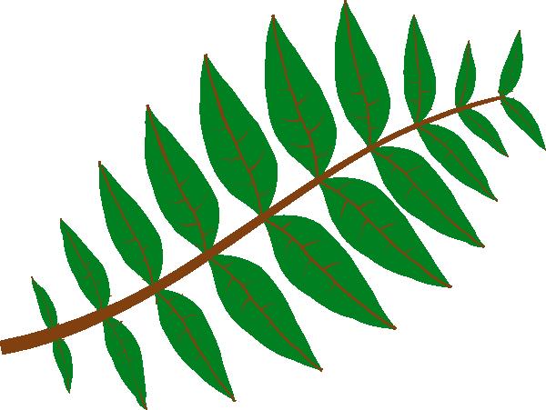 600x451 Rainforest Clipart Jungle Foliage