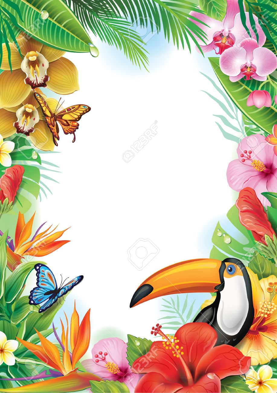 917x1300 Toucanet Clipart Rainforest Butterfly