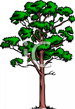 241x350 Rainforest Trees Clipart