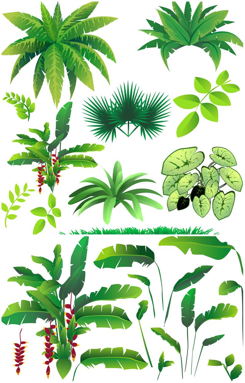 800x1250 Rainforest clipart jungle