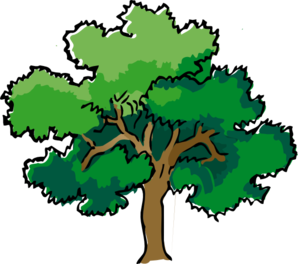 298x264 Rainforest clipart narra tree