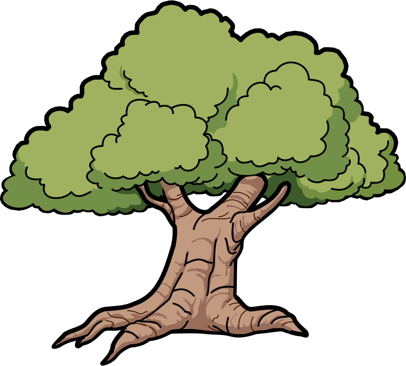 800x721 Rainforest Clipart Rainforest Tree