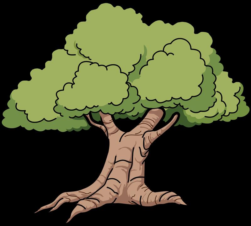 800x721 Narra Tree Clipart
