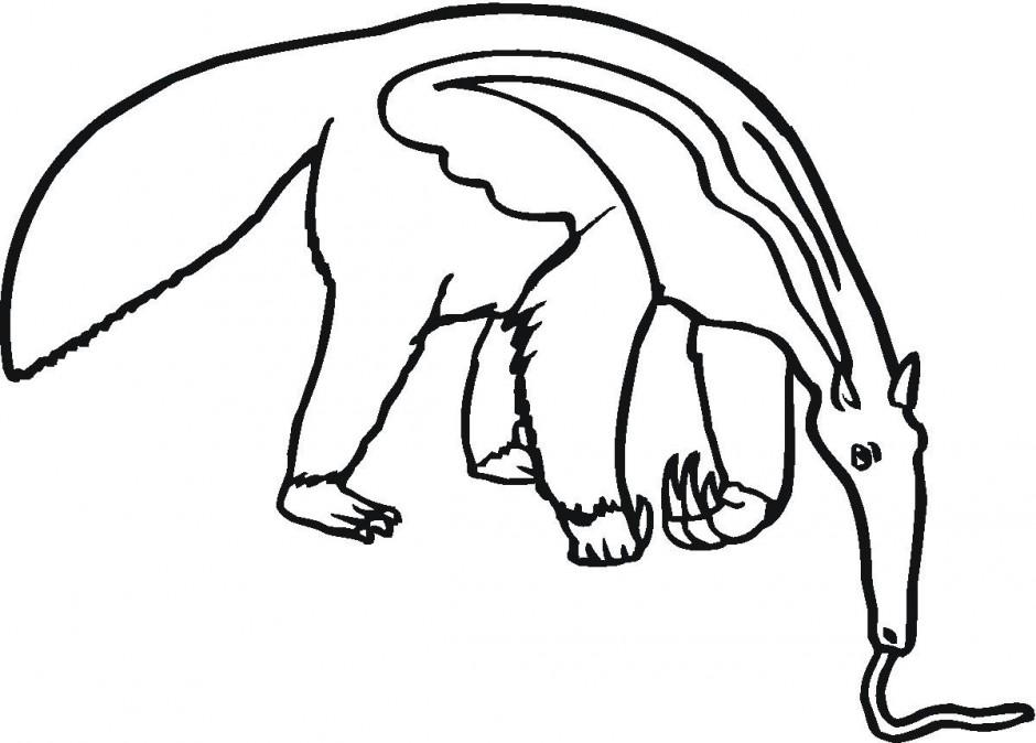 940x674 Rainforest Clipart Anteater