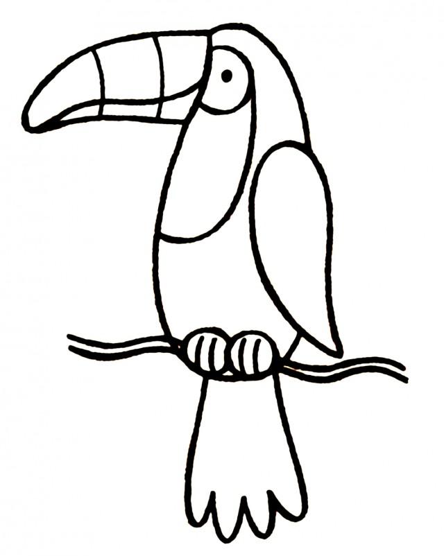 640x802 Toucanet Clipart Rainforest Monkey