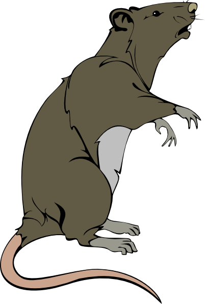 402x596 Grey Greedy Rat Clip Art