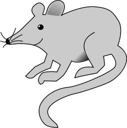 254x256 Mice Clipart Kangaroo Rat