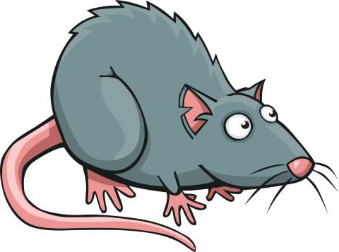 480x357 Rat Clipart