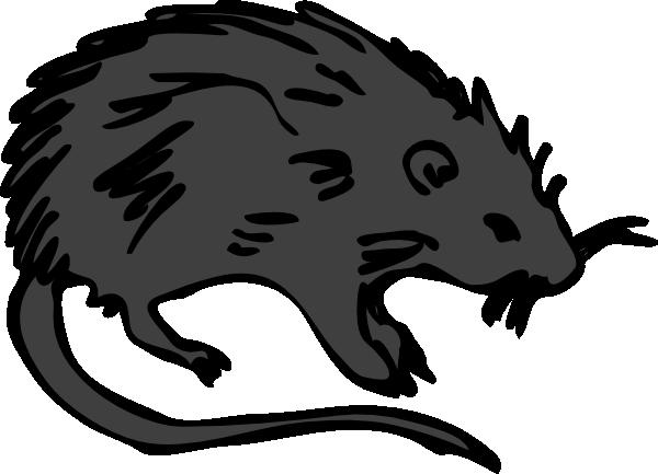 600x433 Black Rat Clip Art