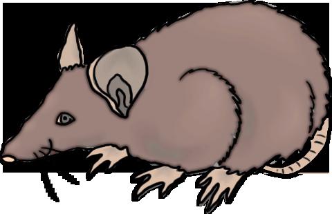 480x310 Rat Clip Art Free Clipart Images 2 2
