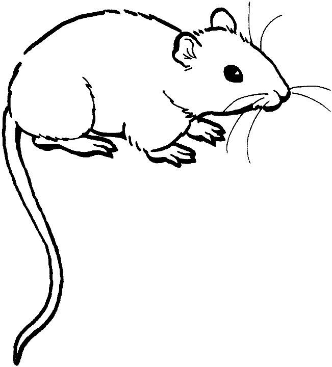 651x720 Rat Clipart Black And White