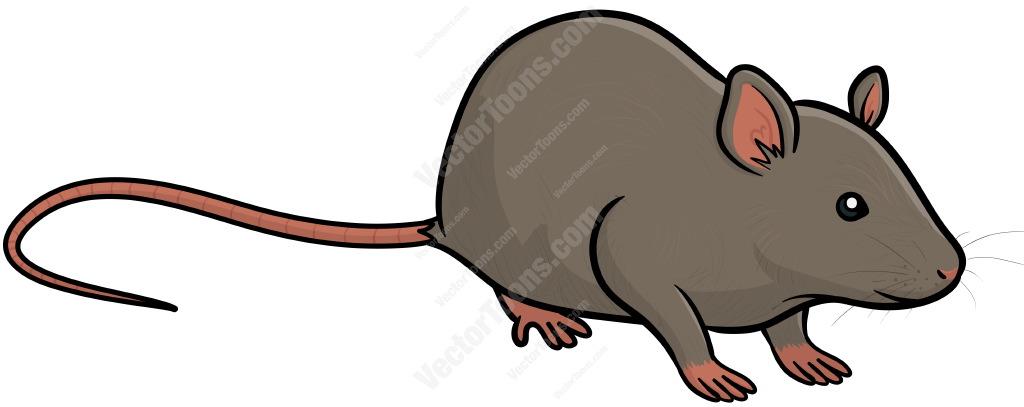 1024x407 Rat Clipart Easy Animal
