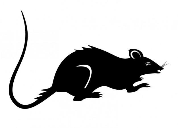626x451 Rat Clipart Silhouette