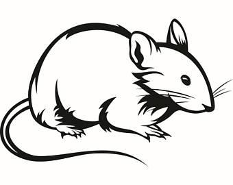 340x270 Rat Clipart Whisker