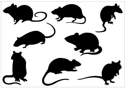 507x360 Rat Silhouette Clip Art Pack Template Clipart