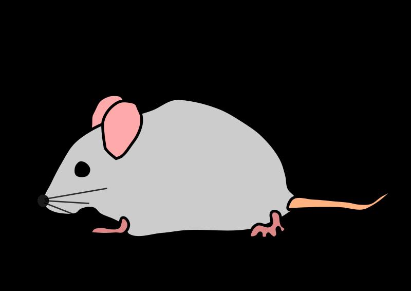 800x566 Rat Clip Art