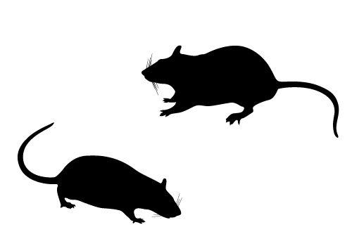 500x350 Rat Clip Art