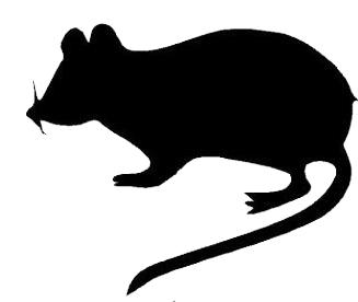 327x276 Clipart Rat