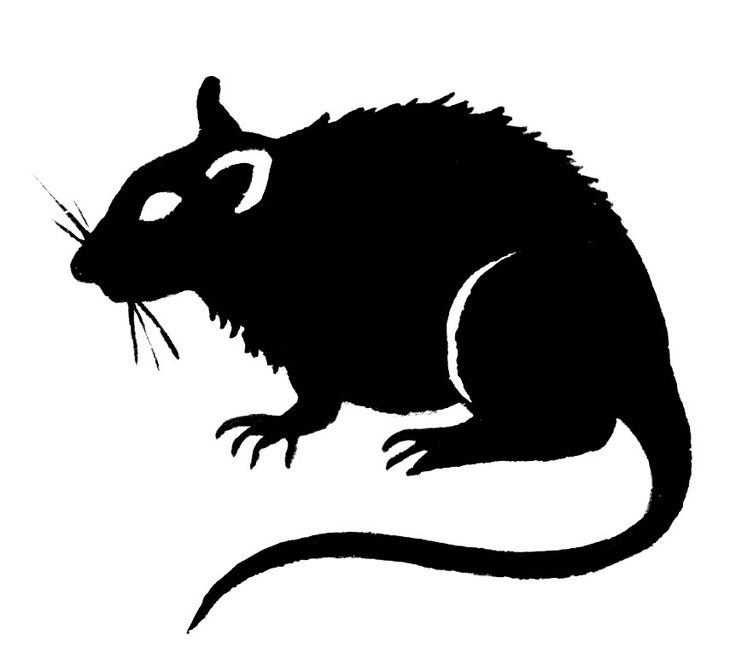736x665 Graphics For Rat Rat Graphics