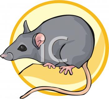 350x316 Royalty Free Rat Clip Art, Rodent Clipart