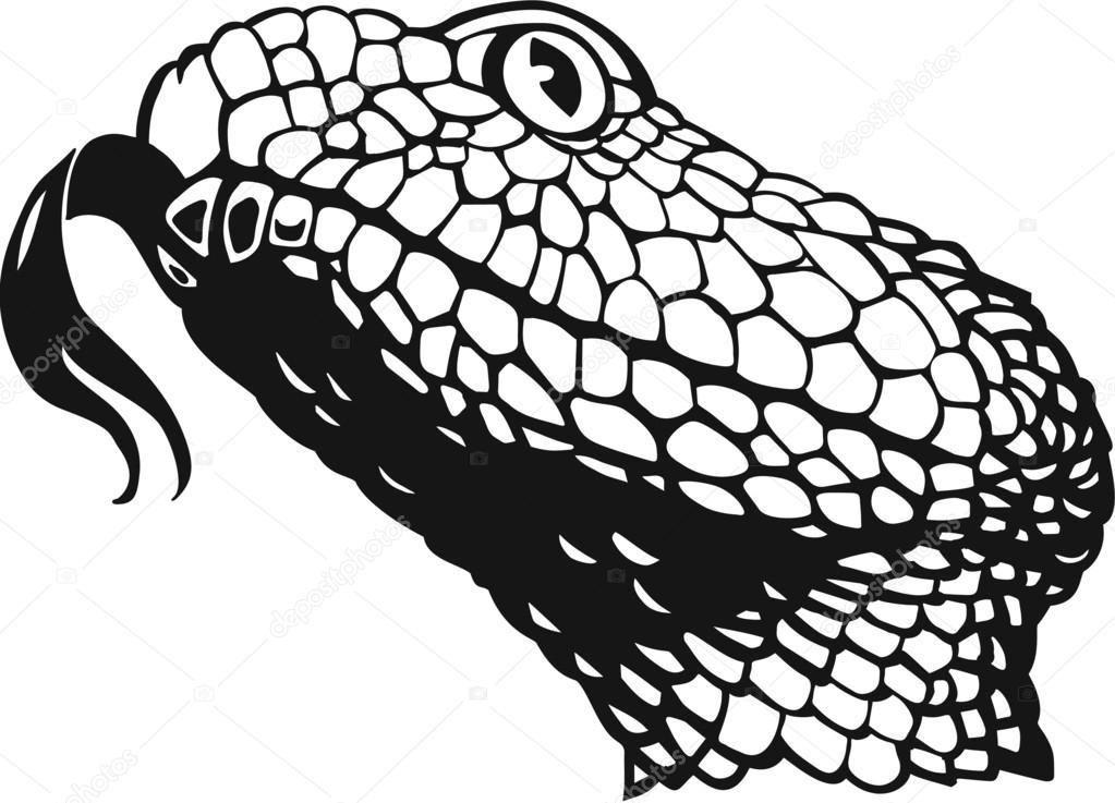 1023x737 Rattlesnake Head Stock Vector Alliedcomputergraphics