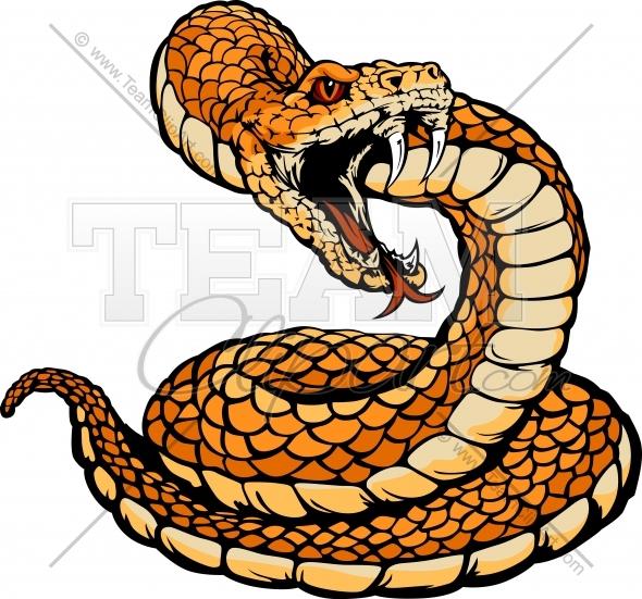 590x551 Rattle Snake Head