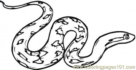 465x239 Boa Constrictor Clipart Black And White