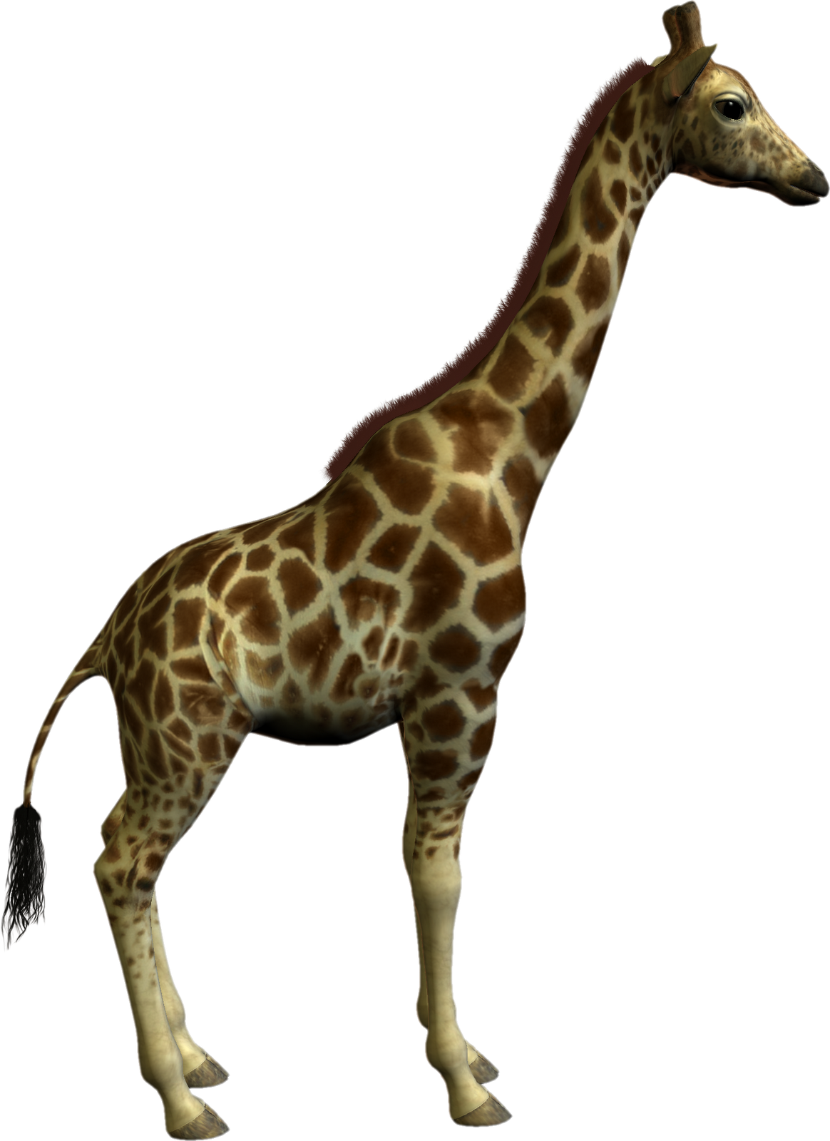 Real Animal Clipart | Free download on ClipArtMag