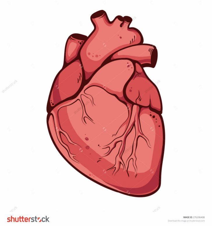 Real Heart Drawing Real Heart Drawing | F...