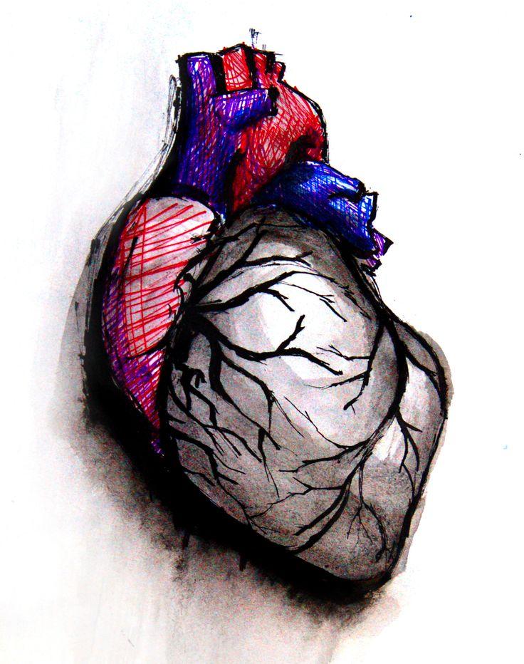 736x932 Best Human Heart Drawing Ideas Human Heart