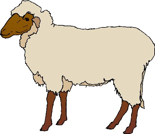 512x445 Realistic Clipart Sheep