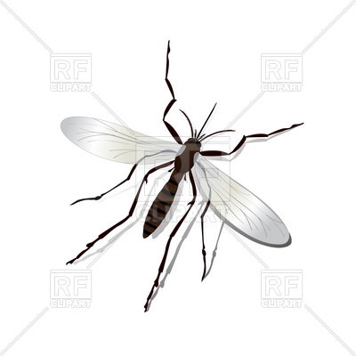 400x400 Realistic Mosquito Royalty Free Vector Clip Art Image