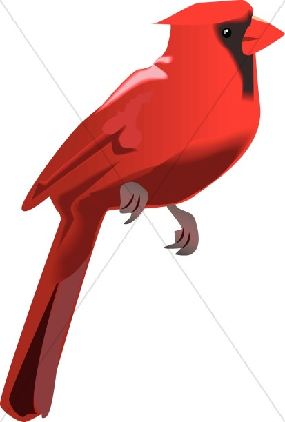 413x612 Cardinal Perched Wildlife Clipart