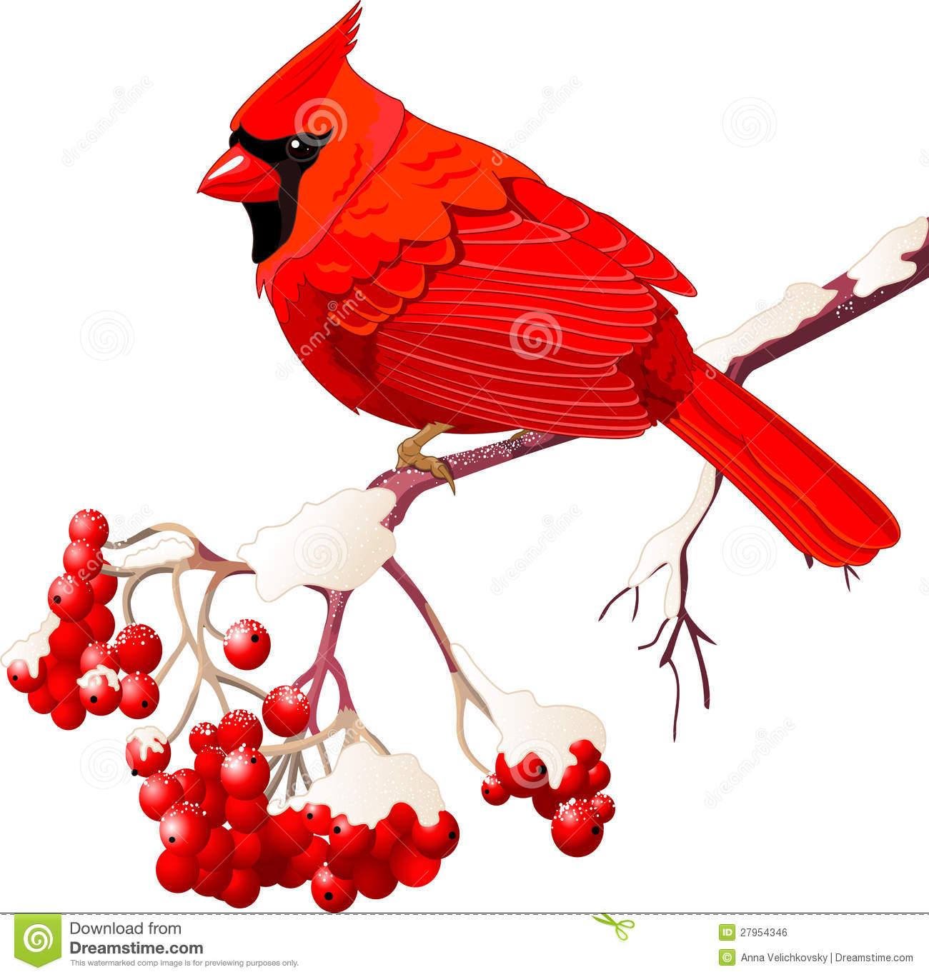 1300x1368 Cardinal Clipart Sketch