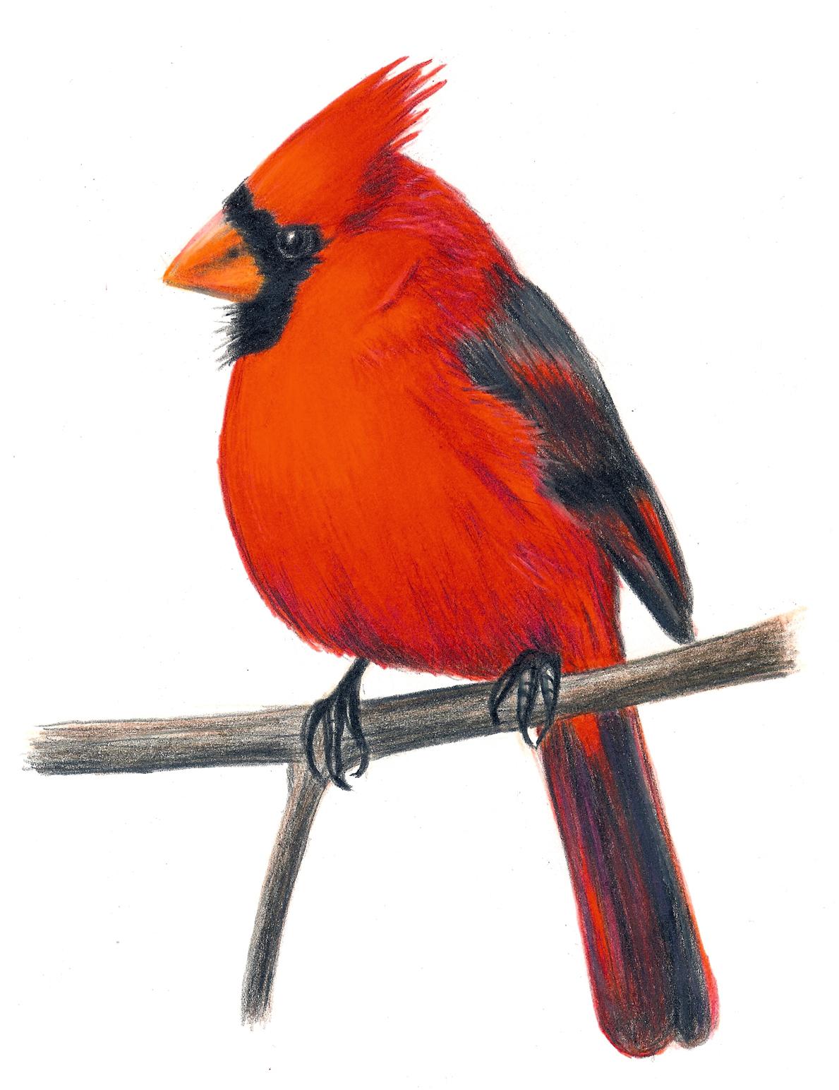 1189x1544 Cardinal Clipart Vintage