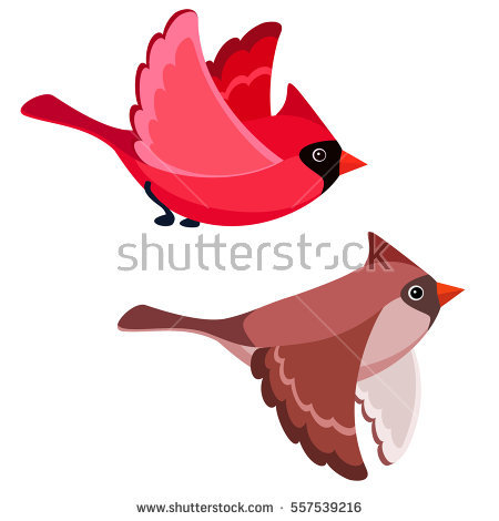 450x470 Realistic Clipart Red Cardinal