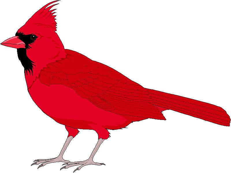 800x600 Red Cardinal Bird Clip Art