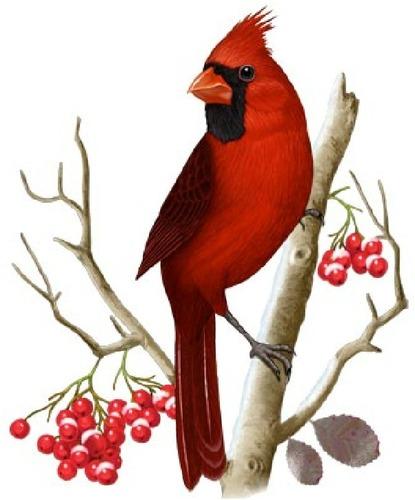 415x500 Top 83 Cardinal Clipart
